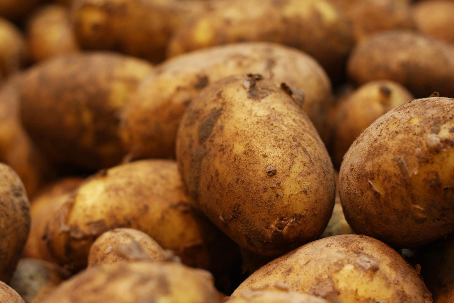 Frühkartoffel Leyla