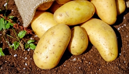 potatoes-1585075_640.jpg